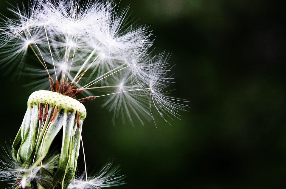 meditatie stiltemeditatie clarity voor jou photocredits Pixabay